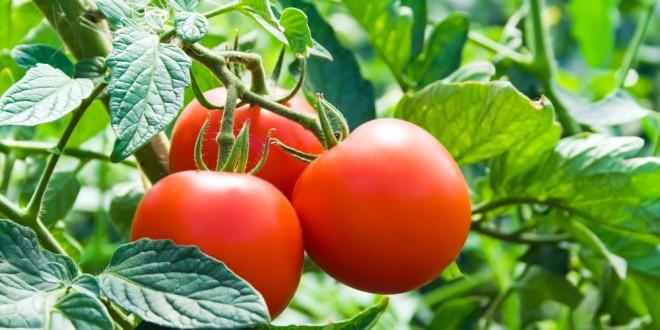 Máte slunný balkón? Zkuste pěstovat zeleninu
