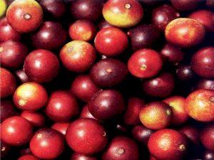 Jak zvýšit přísun vitamínu C ve vaší stravě? Vyzkoušejte prášek z camu camu