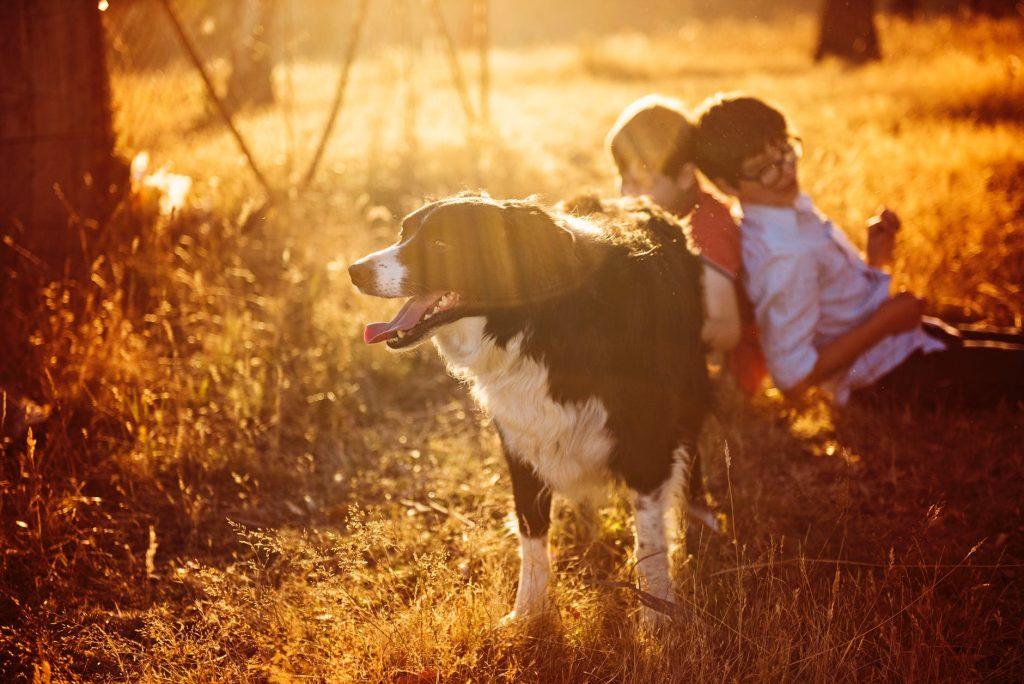 Jaké psí plemeno je ideální do rodiny s dětmi?
